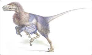 Fuzzy raptor (Copyright John Sibbick)