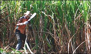 EU - harsh on poor sugar producers, says Oxfam