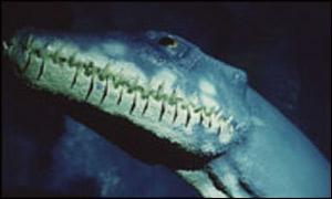 Reconstruction of a plesiosaur head