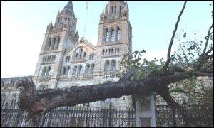 A fallen tree by the Natural History Museum in London
