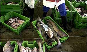 Cod in market