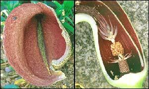 Plant, Nature