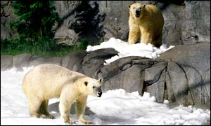 Polar bears are thought to need a varied environment in captivity