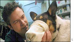 Dr Rafi Kishon applies gas mask to a dog