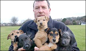 David Jones of Global Rescue Services with his five terrier recruits