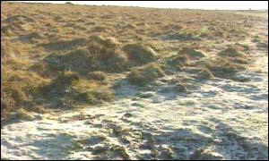 Dartmoor in January