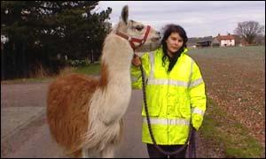 Pacha the llama and his owner, Maria Rosita Apaza Marchaqa