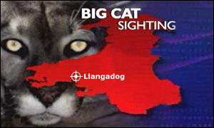 Big cat graphic