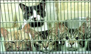Cats in a quarantine cage