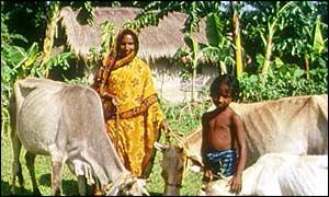 Rural Bangladesh, BBC