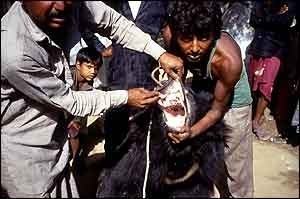 Bear with owner showing teeth removed   WSPA