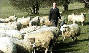 British shepherd