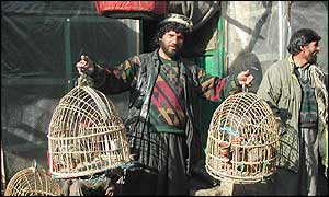 Bird handler in Kabul bazaar