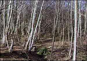 Woodland   BBC