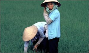 Farmers standing in a rice field 