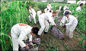 Greenpeace action against GM crop
