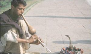 Snake charmer playing to a cobra