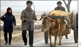 A rare glimpse of North Korean farmers