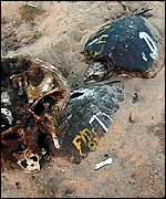 Dead turtles   WPSI/Operation Kachapa/WildAid