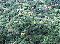 The Brazilian rainforest