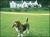 Batty the basset in front of the Holne Chase Hotel