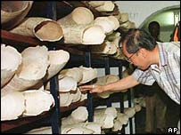 Ivory auction in Zimbabwe