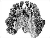 Jawbone, Blumenschine et al