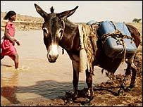 Donkey at