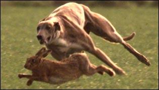 http://newsimg.bbc.co.uk/media/images/38893000/jpg/_38893083_hare_coursing_315.jpg