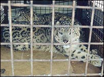 Leopard cage  Throsten Harder