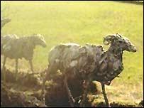 Scrap-metal sheep