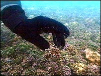 Maerl beds