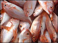 Red fish, known as Yeki