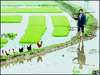 Man beside flooded rice paddy in China, AP