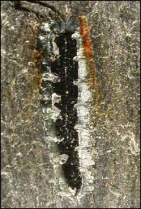 Fossil, University of Leicester