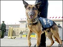 A police dog in Tiananmen Square in central Beijing