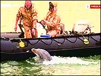 Dolphin being used to indicate the presence of mines