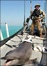 Dolphin on boat   AFP