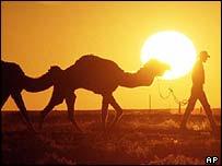 Australian camel train
