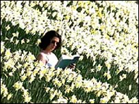 Reading amongst the daffodils