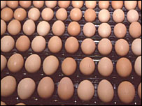 Eggs on a production line