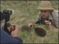 Hedgehog and reporter