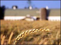 Grainfield and house   Monsanto
