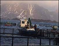 Fish farmer in Lofoten