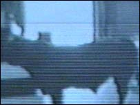 A CCTV picture of the bull in G.B Antiques, Lancaster