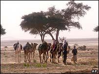 Caravan in Algerian Sahara