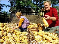 Hungarian corn farmers