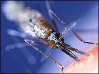 Mosquitoes spread malaria