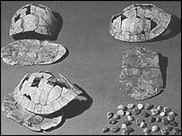 Tortoise shells bearing the ancient writing