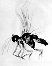 Strepsiptera, Image by Jeyaraney Kathirithamby